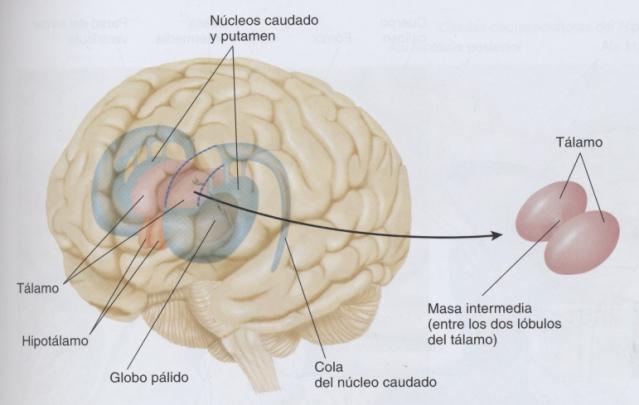 # Carlson, N.: Fisiología de la conducta. 8ª ed. Madrid: Addison Wesley, 2005, p. 93
