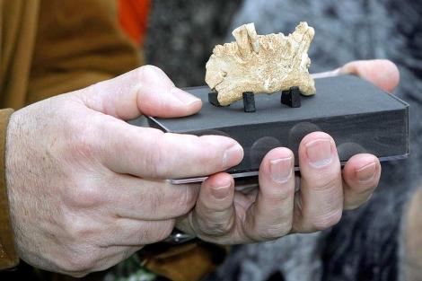 Mandíbula de la Sima del Elefante perteneciente a los primeros homínidos europeos.